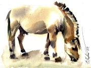 Horse, watercolor on paper, 22 x 16,5 cm, 2007