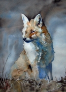Młody lis